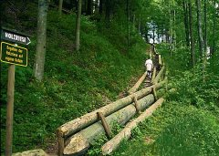 holzriese